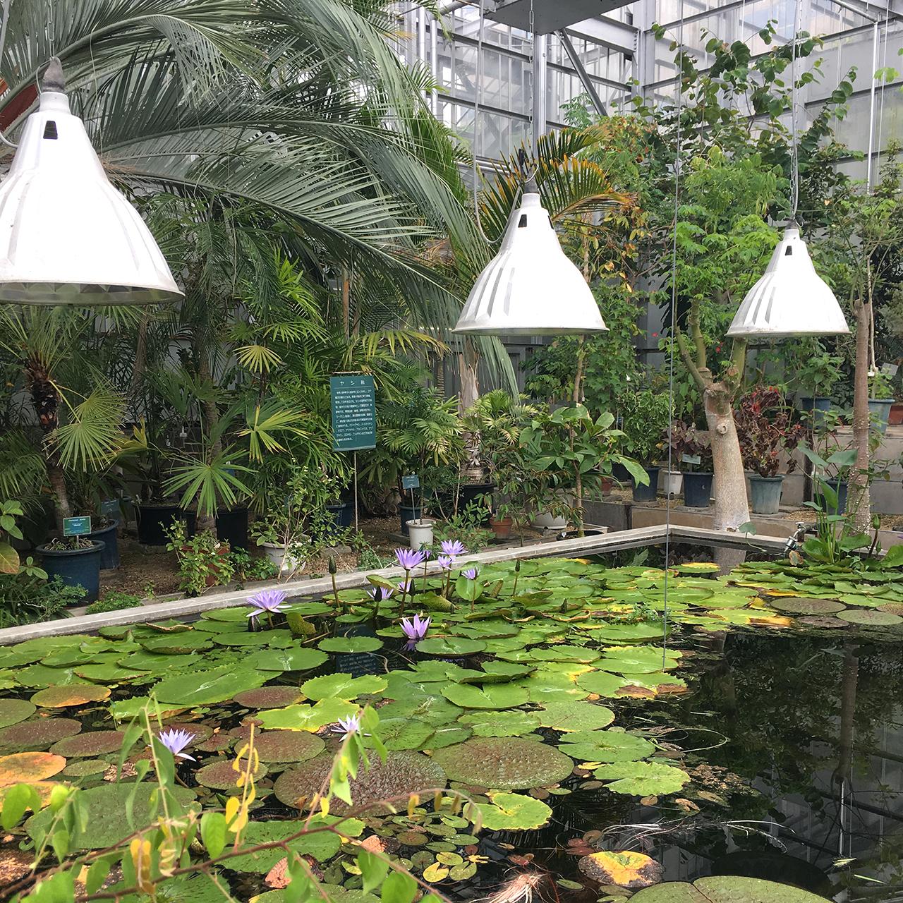 いったところmemo 北海道大学植物園
