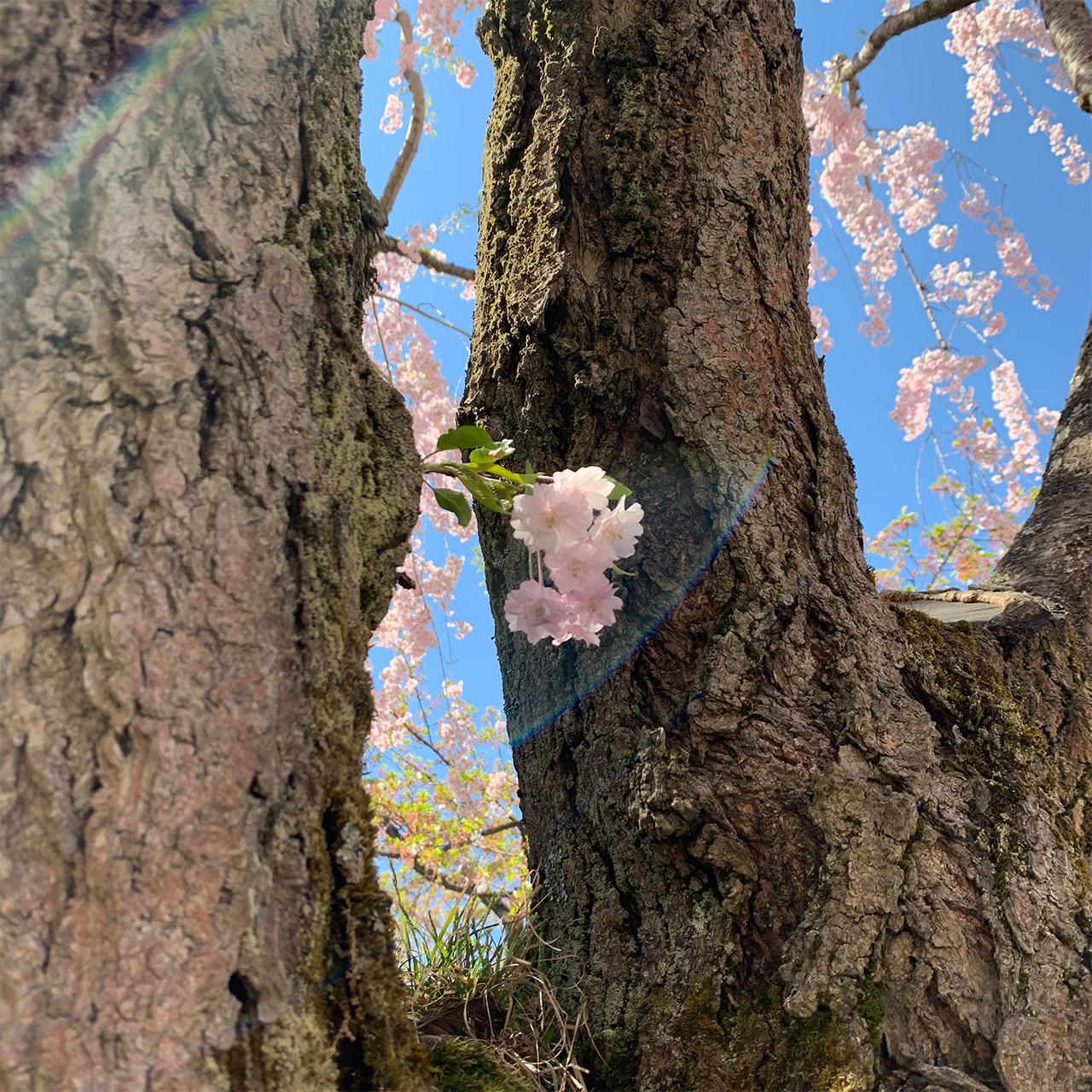 春/spring/Frühling