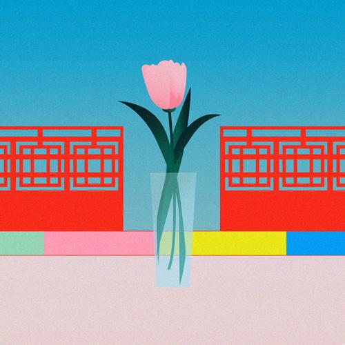 チューリップ/tulip/tulpe
